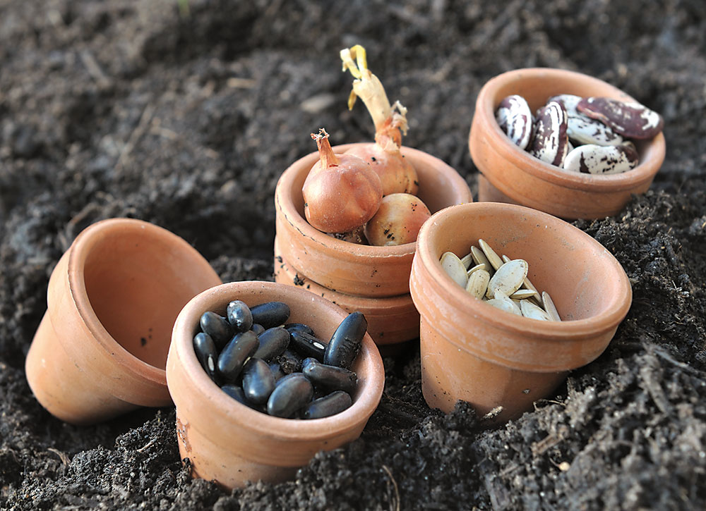 semená rastlín