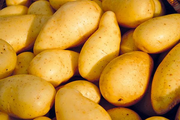 skladovanie zemiakov