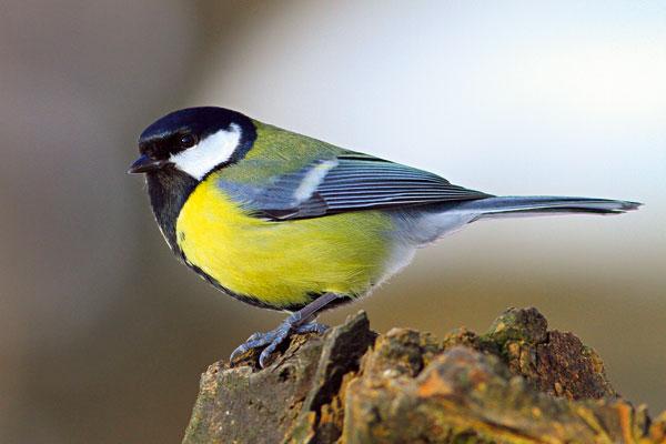 03 sosbirdlife big image