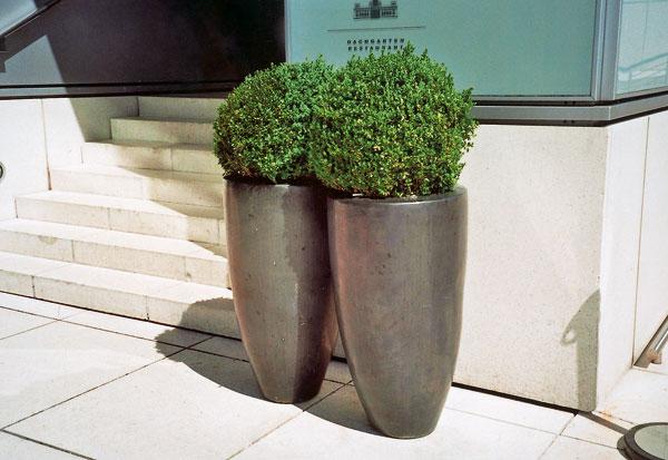 Tmavosivá kovová farba kvetináčov so zeleným krušpánom harmonizuje so svetlým pozadím.