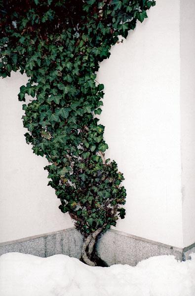 09 lesinska big image