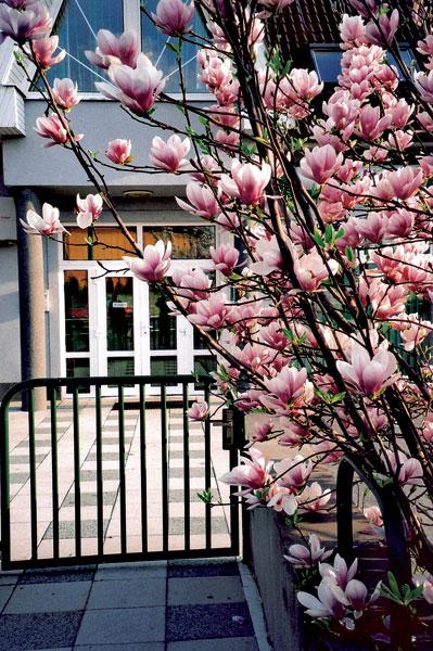 18 zahrada big image