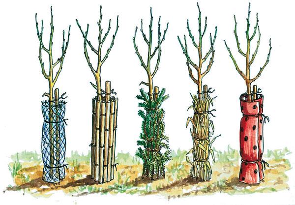 Ochranné obaly kmeňov stromčekov Obal z pletiva       Obal z čečiny         Obal z kôrovia        Obal z drevených latiek