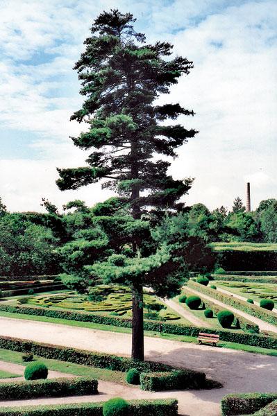03 zahrada big image