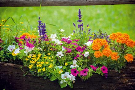 10 letnych rastlin ktore preziaria kazdy kut