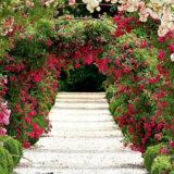 5 sposobov vyuzitia ruzi