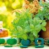 8 najchutnejsich byliniek ktore si mozete sami vypestovat
