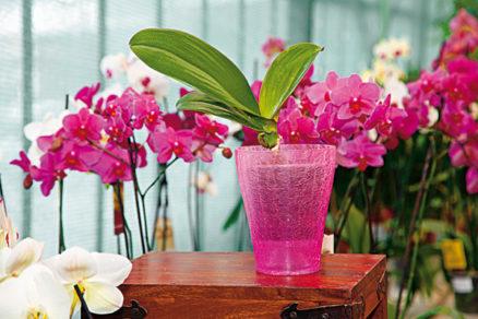 aby boli vase orchidey opat vo forme