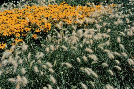 aka zahrada je vhodna pre alergikov