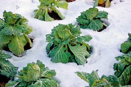 ako na pestovanie zeleniny v chladnych mesiacoch