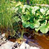 ako skraslit jazierko zelenou