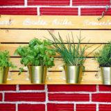 cerstve bylinky do salatov pestujte na balkone