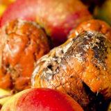 choroby skladovaneho ovocia