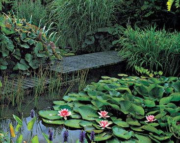 ekologicka zahrada 1. cast zakladne podmienky