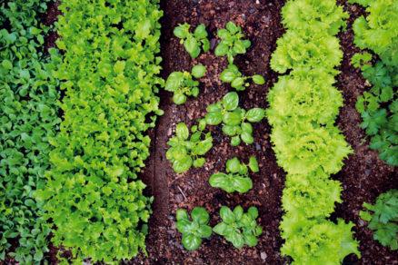 hnojime ekologicky
