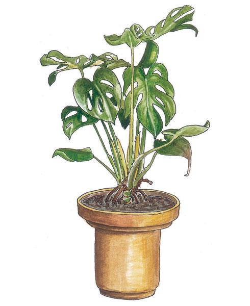 hydroponicke pestovanie rastlin