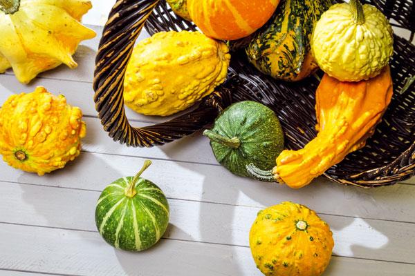 Novembrová poradňa pre záhradkárov