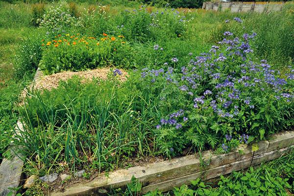 Neviete ako využiť záhradný odpad?