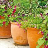 Ako si založiť kvetinovú záhradu