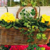 Skrášlite si balkón rozkvitnutým závesným košíkom