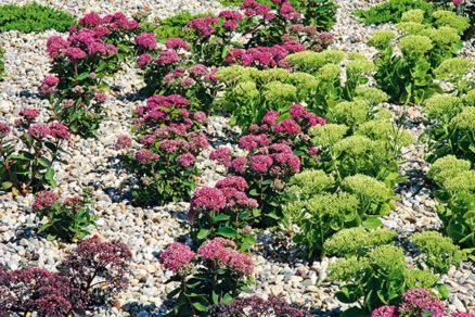 Pestrofarebná záhrada aj bez vody