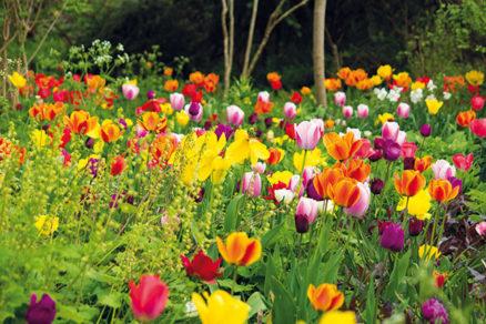 Pripravte sa na sezónu tulipánov už dnes