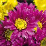 8 najkrajších rastlín neskorého leta