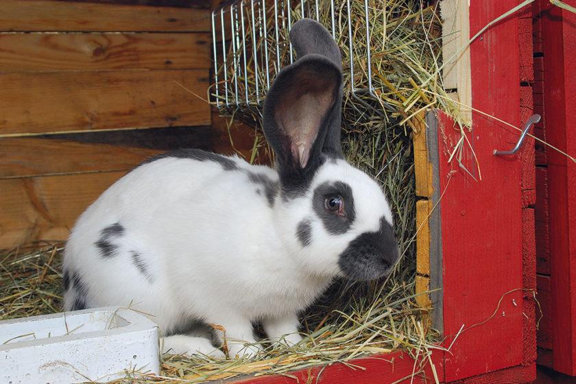 Rady pre chovateľov králikov