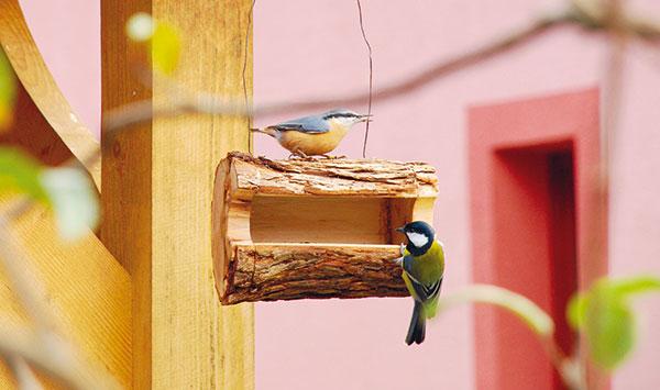 Kŕmidlo pre vtáčatá z jedného dreveného polienka