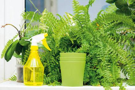 Čo potrebujú jednotlivé druhy izbových rastlín, aby sa im darilo?