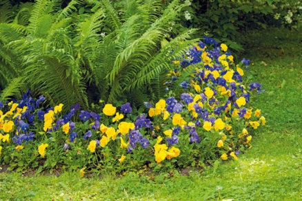 Ako si založiť nádherný kvetinový záhon