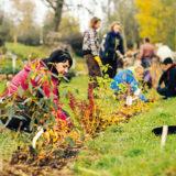 Ako si vysadiť jedlý a okrasný živý plot