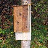Keď sa stará paleta zmení na búdku pre netopiere