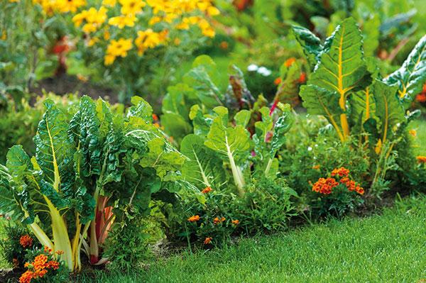 Ako ochrániť pór a cibuľu v ekozáhrade