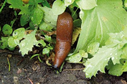 Je možné dosiahnuť harmóniu so záhradnými škodcami?
