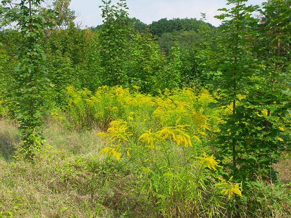 Prírodné zákony, ktoré sa pri udržiavaní ekozáhrady oplatí poznať