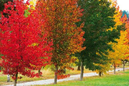 10 najfarebnejších drevín jesene