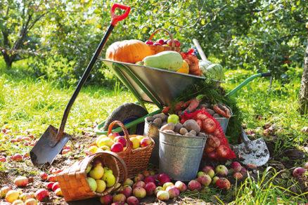 Ako uskladniť úrodu, aby ovocie a zelenina ostali dlho chutné
