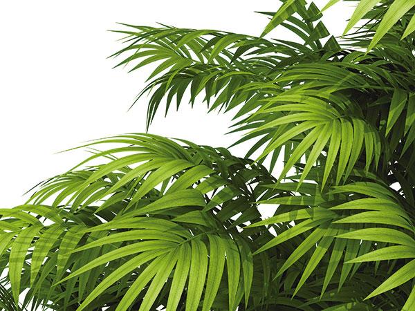 Zimná starostlivosť o palmy. Ako ich správne pestovať?