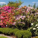 10 drevín do malej záhrady