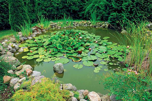 Malé a lacné záhradné jazierko