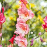 Najvyšší čas vysádzať kvetinové záhony!
