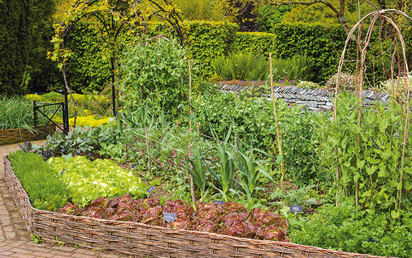 Aj zeleninová záhradka môže byť okrasná. Ako na to?