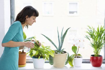 Ako prihnojovať izbové rastliny
