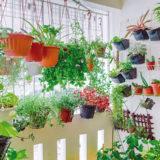 Výber rastlín na balkón podľa orientácie na svetové strany
