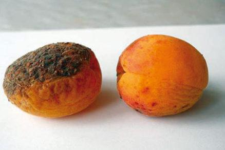 Ako sa postarať o marhuľu, aby mala znova zdravé plody