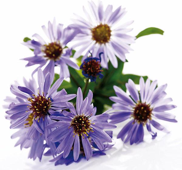 10 ideálnych rastlín na zaplnenie prázdnych miest v záhrade
