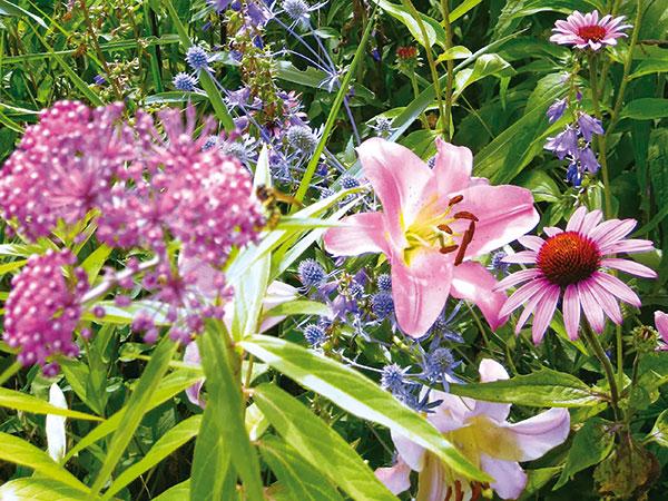 Semená z vlastnej záhrady: Nekupujte na jar drahé osivá!