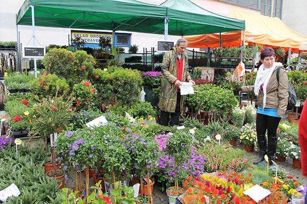 Novinky pre záhradu ponúkne v Trenčíne tradičný veľtrh Záhradkár