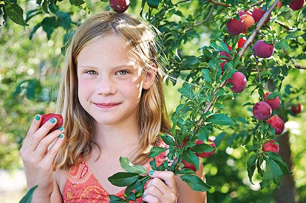 Ovocná záhradka na 3 ároch? Druhy a odrody vhodné do malého priestoru